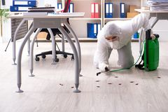 The professional contractor doing pest control at office royalty free stock photography