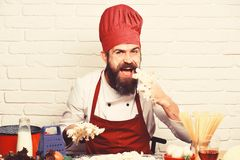 Professional cookery concept. Cook with hungry happy face. In burgundy uniform eats raw dough mix at table. Man with beard licks dough off fingers on white stock photography