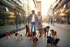 Professional couple dog walker in the street with lots of dogs. Smiling professional couple dog walker in the street with lots of dogs royalty free stock photos