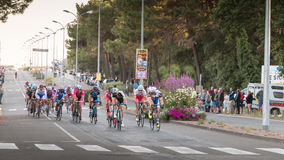 Professional cycling peloton during a night race Stock Image