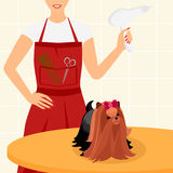 Professional dog grooming for Yorkshire Terrier. Beautiful yorkshire terrier is sitting on the table with a hairdresser Royalty Free Stock Images