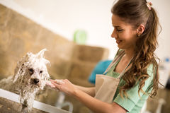 Professional dog showering Stock Images