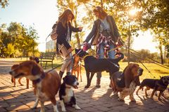 Professional Dog Walker enjoying with dogs while walking outdoors. Professional Dog Walker women enjoying with dogs while walking outdoors royalty free stock photo