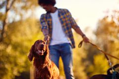 Professional Dog Walker - dog enjoying in walk outdoors royalty free stock images