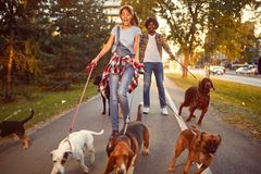 Professional Dog Walker - funny walking with with dogs. Outdoors royalty free stock photography