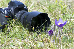 Professional dslr. Professional photo camera on nature ambiance stock image