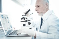 Professional experienced researcher looking at the laptop screen. Online research. Professional smart experienced researcher sitting in front of the laptop and royalty free stock images