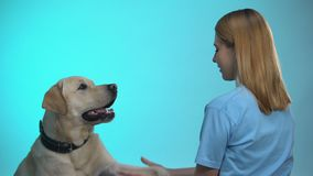 Professional female dog trainer teaching labrador pet commands, cynology science. Stock footage stock video footage