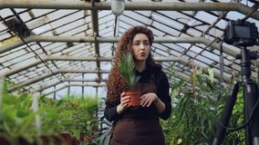 Professional female gardener is recording tutorial about gardening with camera standing inside spacious hothouse and. Holding pot plant. Farming and young stock footage