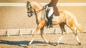 Elegant rider woman and sorrel horse. Beautiful girl at advanced dressage test on equestrian competition. Professional female horse rider, equine theme. Saddle Stock Photos