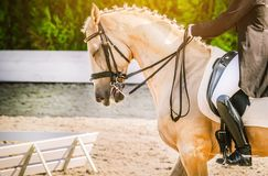 Elegant rider woman and sorrel horse. Beautiful girl at advanced dressage test on equestrian competition. Professional female horse rider, equine theme. Saddle Royalty Free Stock Photos