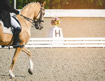 Elegant rider woman and sorrel horse. Beautiful girl at advanced dressage test on equestrian competition. Professional female horse rider, equine theme. Saddle Royalty Free Stock Images