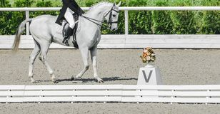 Elegant rider woman and white horse. Beautiful girl at advanced dressage test on equestrian competition. Professional female horse rider, equine theme. Saddle Royalty Free Stock Photos