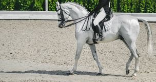 Elegant rider woman and white horse. Beautiful girl at advanced dressage test on equestrian competition. Professional female horse rider, equine theme. Saddle Royalty Free Stock Image