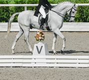 Elegant rider woman and white horse. Beautiful girl at advanced dressage test on equestrian competition. Professional female horse rider, equine theme. Saddle Royalty Free Stock Photo