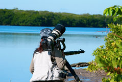 Professional female nature photographer. Preparing to shoot in the Florida mangroves Royalty Free Stock Image