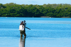 Professional female nature photographer. Approaching wildlife in the Florida mangroves Royalty Free Stock Image