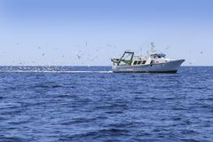 Professional fisherboat many seagulls blue ocean Royalty Free Stock Images
