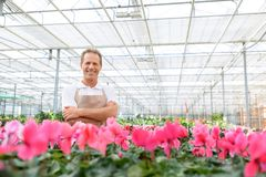 Professional florist workin gin the greenhouse Stock Image
