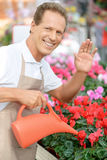 Professional florist workin gin the greenhouse Stock Photos