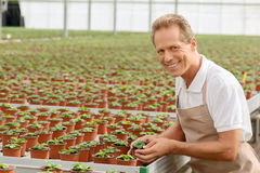 Professional florist working in the greenhouse Stock Photo