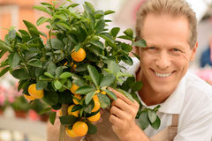 Professional florist working in the greenhouse Stock Images