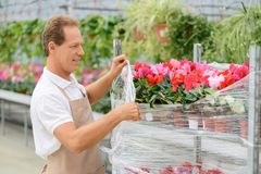 Professional florist working in the greenhouse Royalty Free Stock Photos