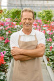 Professional florist working in the greenhouse Stock Image