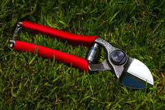 Professional garden secateurs Royalty Free Stock Photography