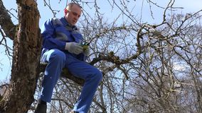 Professional gardener climb up into fruit tree, sit on branch and prune twigs stock footage