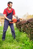 Professional gardener dressed with safety overalls using an hedge stock image