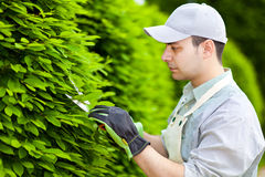 Professional gardener pruning an hedge Royalty Free Stock Image