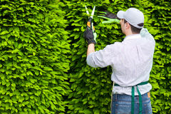 Professional gardener pruning an hedge Stock Photography