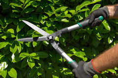 Professional Gardener Pruning a Hedge Royalty Free Stock Image