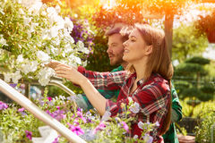 Professional gardeners with plants Royalty Free Stock Images