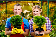 Professional gardeners team with seedlings Stock Photos
