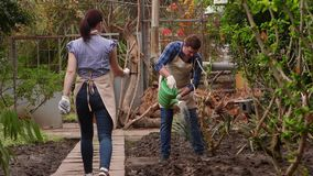 Gardeners are working in the greenhouse, man is watering plants, woman is walking on path. Professional gardeners at work in the greenhouse, man is watering stock video