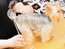 Professional grooming Stock Photography