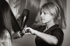 Professional hair stylist with hairdryer and comb working at customer`s hair. Royalty Free Stock Photo
