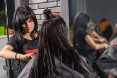 Professional hairdresser combing wet hair of young brunette woma. Professional hairdresser combing wet hair of young brunette women with a bun while she is Stock Photography