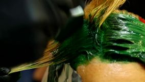 Professional hairdresser dyeing hair. Multicolor with stretching coloring. Fluorescent staining stock video footage