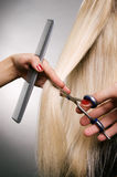 Professional hairdresser in the work Stock Images