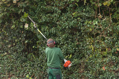 Professional hedges cutting Royalty Free Stock Images