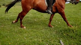 Professional horse riding slow motion. Horse legs move with gallop high speed