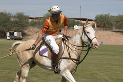 Professional International Polo Player Royalty Free Stock Images