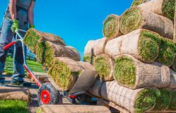 Landscaper Grass Instalation. Professional Landscaper Installing Natural Grass Turfs in the Garden royalty free stock image