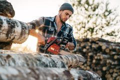 Professional lumberman wearing plaid shirt sawing tree with chainsaw. On sawmill stock photos