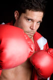 Professional Male Boxer. Handsome professional male sports boxer stock image
