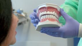 Dentist shows the client layout of human teeth royalty free stock image