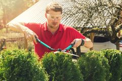 Professional male gardener pruning hedge at home backyard Royalty Free Stock Photography